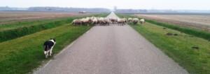 Page_slider_schapen_wandelen