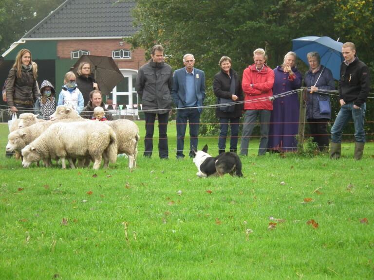Demonstratie schapendrijven